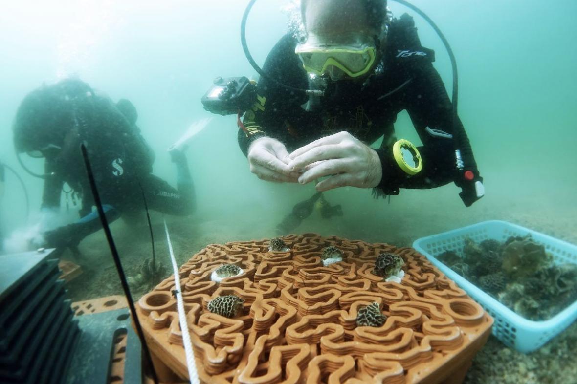 خبرنگاران بازسازی صخره های مرجانی با استفاده از فناوری چاپ سه بعدی