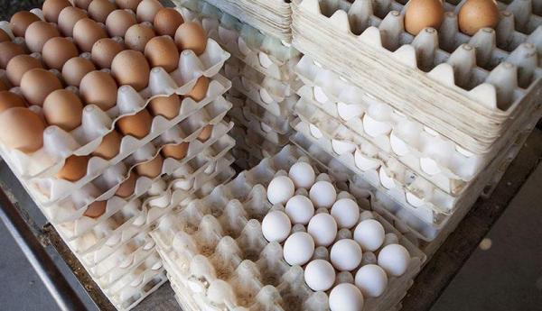 تخم مرغ شانه ای 48 هزار تومان شد ، علت گرانی چیست؟