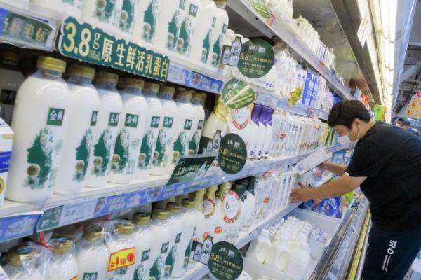 چین به دنبال فراوری حداکثری شیر ، این کشور گاو کافی ندارد