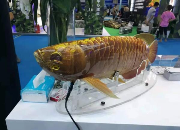 ارتش چین از یک درون زیرآبی به شکل یک ماهی رونمایی کرد